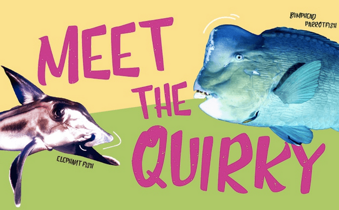 Spooky Seas: Meet the Quirky