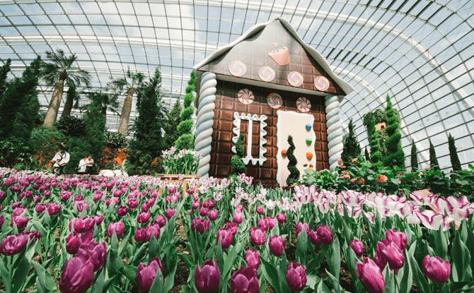 Tulipmania