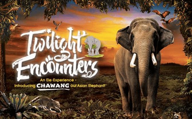 Twilight Encounters 2016 Night Safari
