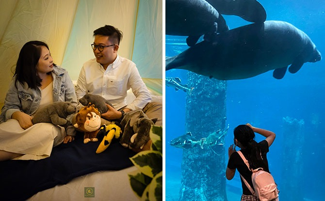 Glamping With The Manatees: Have A Staycay At River Safari