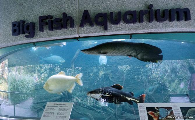 Big Fish Aquarium