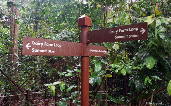 Choose your path on the Dairy Farm Loop