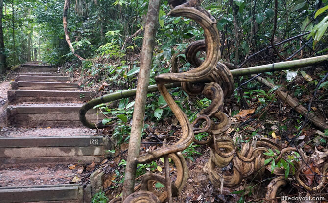 Stairs along the Wallace Trail