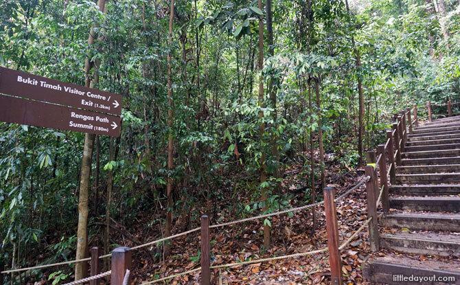 Follow the Rengus Path to Bukit Timah Hill Summit