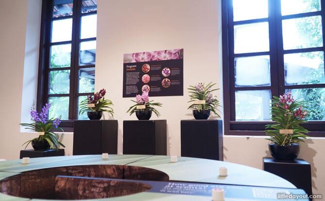 Olfactory exhibition, Centre for Ethnobotany, Singapore Botanic Gardens