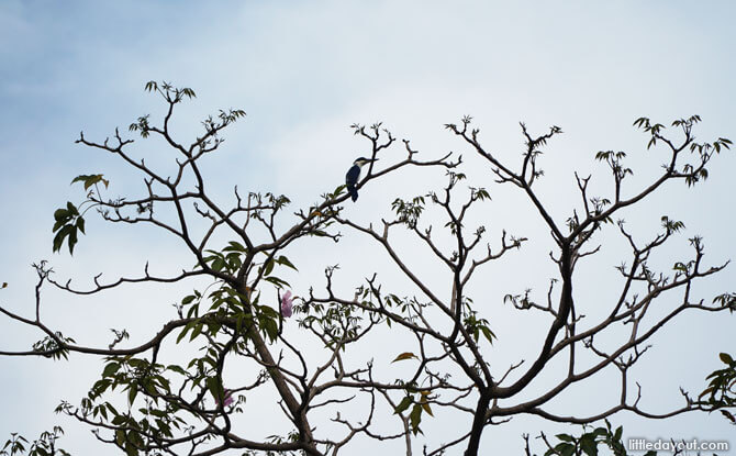 Tree with a Kingfisher