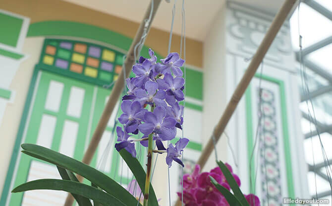 Orchid from bamboo poles
