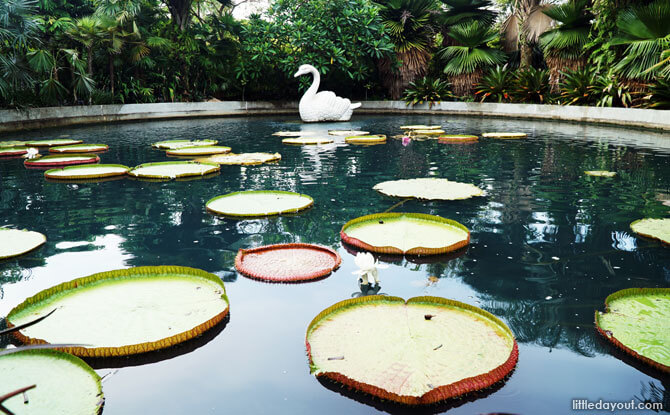 Victoria Lily Pond, Gardens by the Bay, Singapore