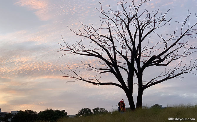 Little Stories: The Lone Tree At Jurong Lake Gardens Grasslands