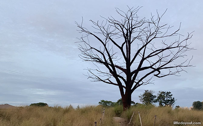Lone Tree at Jurong Lake Gardens