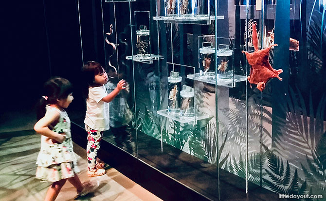 Exploring Singapore's Lee Kong Chian Natural History Museum