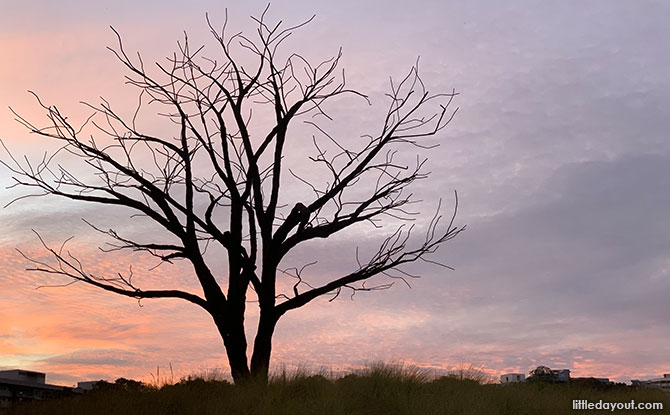 Little Stories: The Lone Tree At Jurong Lake Gardens