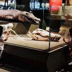 Lee Kong Chian Natural History Museum: Dinosaurs And Other Discoveries In The Natural World