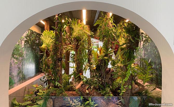 Lowland Forest Understorey Terrarium