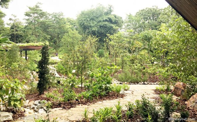 Singapore Botanic Garden's Ethnobotany Garden