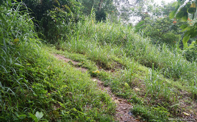 Kampong paths along the Wallace Trail, Dairy Farm Nature Park