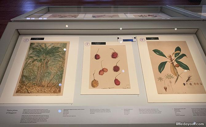 Singapore Botanic Gardens' Art Collection