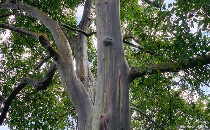 Rainbow Tree Katong Park