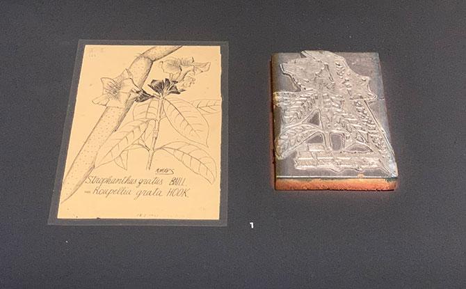 Botanical Art Gallery displays
