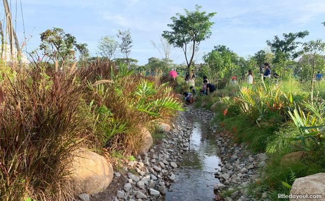 Stream at Sembawang Hot Spring Park