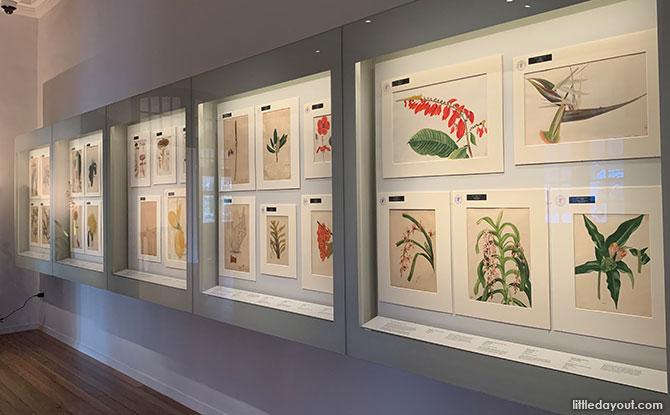 Botanical Art Gallery At 7 Gallop Road