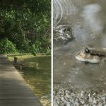 Boardwalks In Singapore Where You Can Explore Life At The Water's Edge