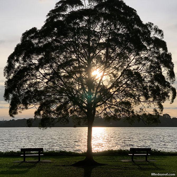 Upper Seletar Reservoir Tree
