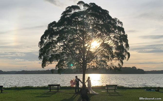 Upper Seletar Reservoir Tree: The Tree & Two Benches