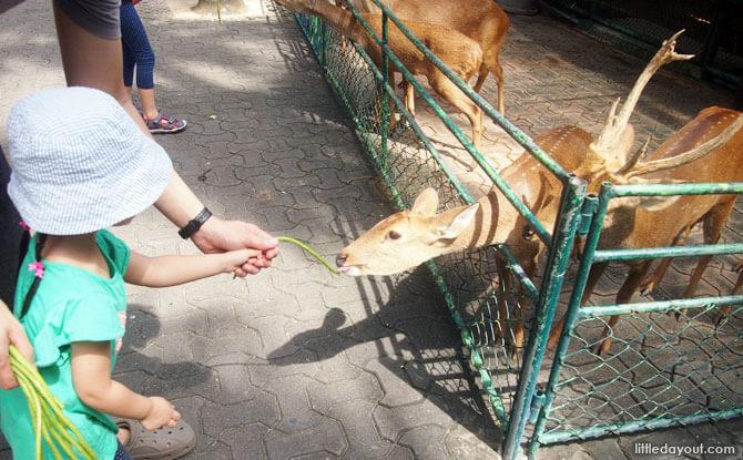 Petting zoo at Nong Nooch Tropical Garden