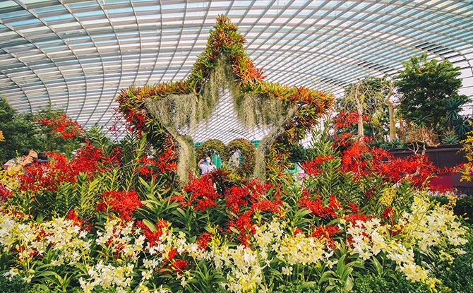 New Orchid Display at Gardens by the Bay's Flower Dome