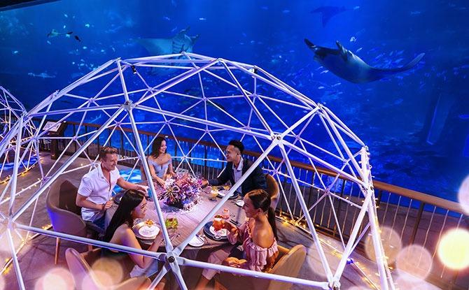 Aqua Gastronomy, A New Experience at S.E.A. Aquarium