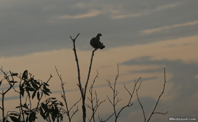 Bird perched on a tree at Sungei Buloh