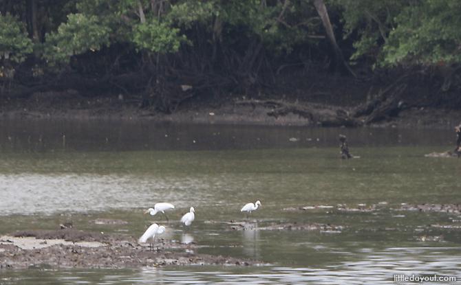 Sungei Buloh Wetland Reserve is a sanctuary for birds