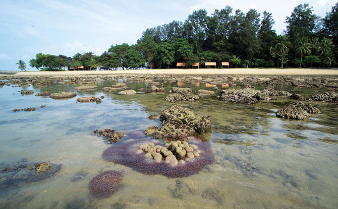Coral Reefs in Singapore