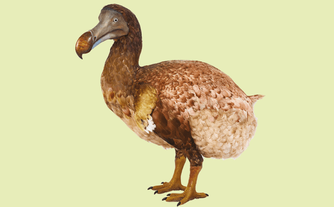 Dodo model, Treasures of the Natural World