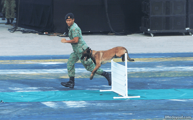 Military Working Dog Show