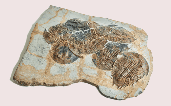 Treasures of the Natural at ArtScience Museum