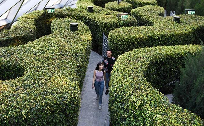 Canopy Park Maze