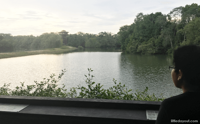 Looking out from the Main Hide at Sungei Buloh Wetland Reserve
