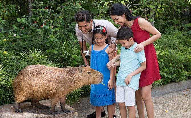 Capybara Interaction