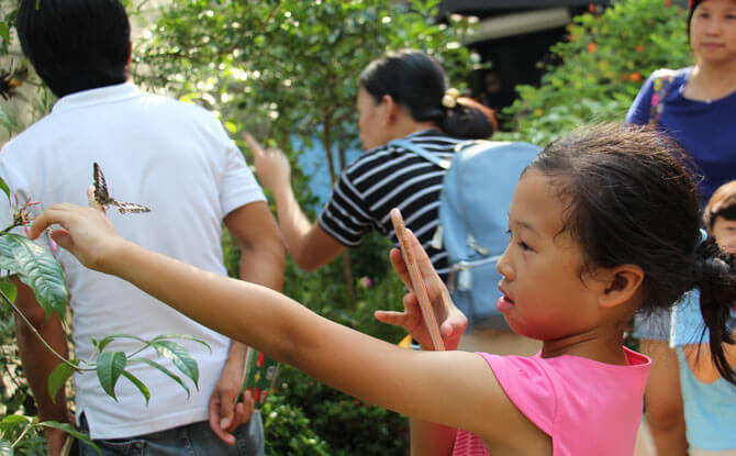 Have A Fluttering Encounter At Singapore Zoo's Fragile Forest Butterfly Aviary