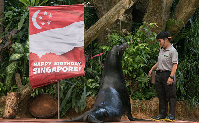 Celebrate at Singapore Zoo, River Safari and Jurong Bird Park