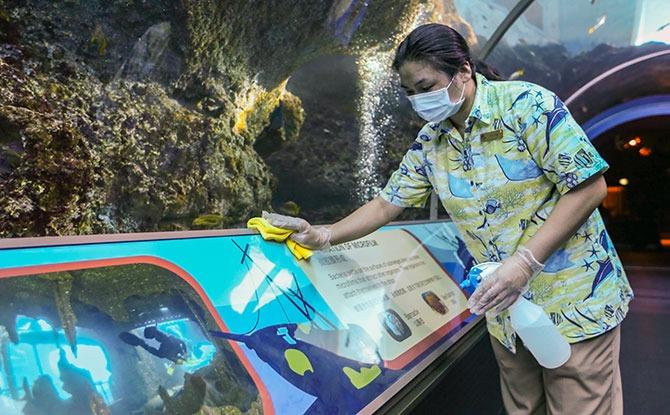 Universal Studios Singapore and S.E.A. Aquarium Reopening
