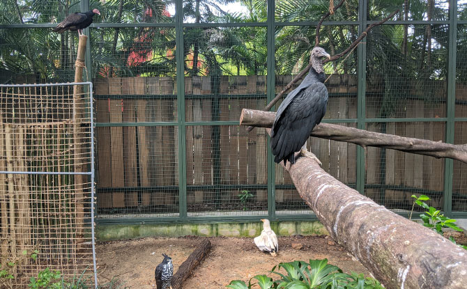 Retirement Aviary at Jurong Bird Park