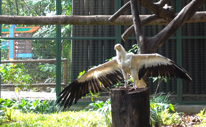 Retirement Aviary Opens At Jurong Bird Park For Former Stars Of Kings Of The Skies Show