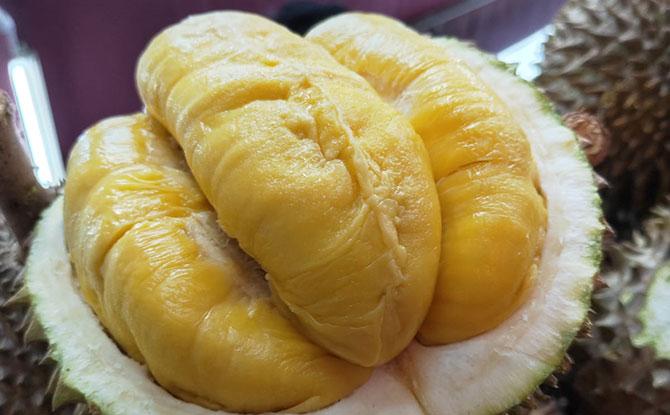 """Mao"" Faber Durian Night"