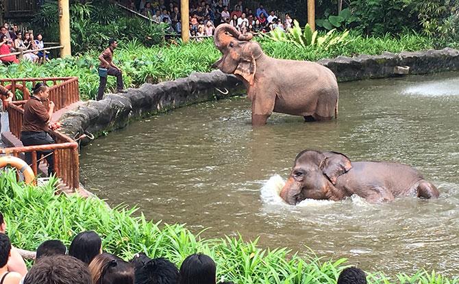 New elephant presentation at Singapore Zoo's elephant exhibit