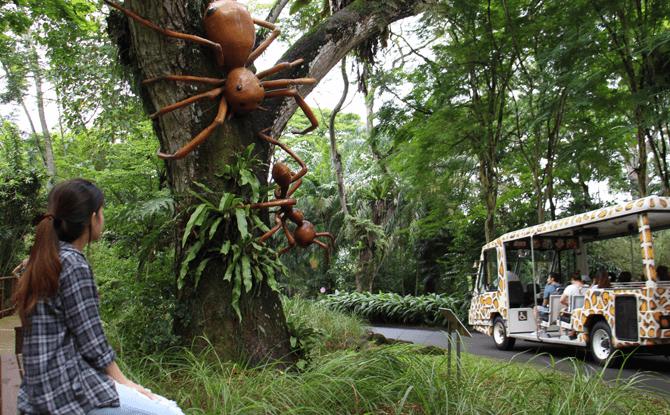 Land of Giants, Singapore Zoo and River Safari