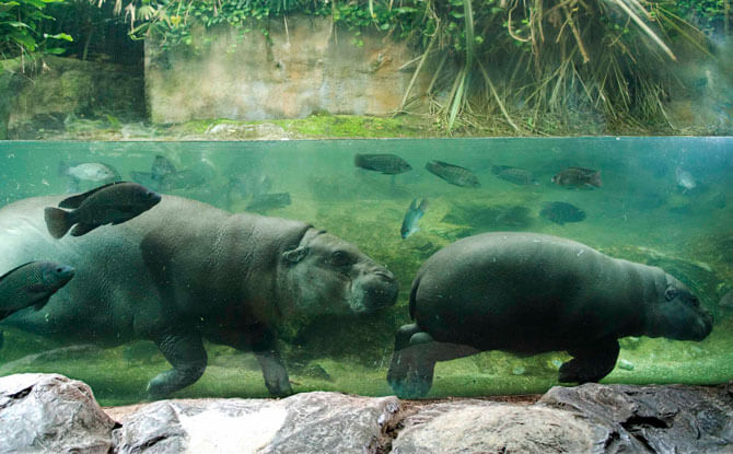 Singapore Zoo Activities During June School Holidays 2018