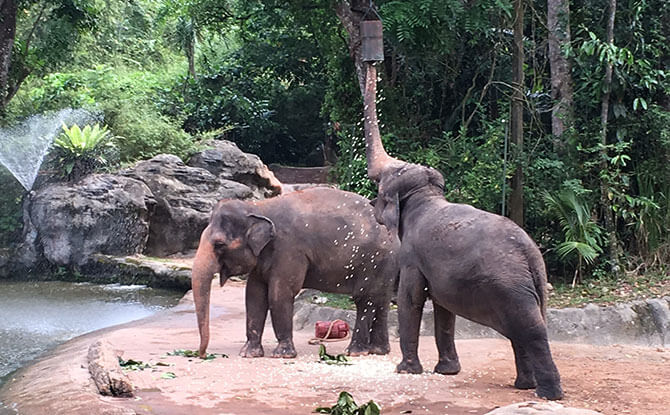 Revamped Elephant Presentation at Singapore Zoo